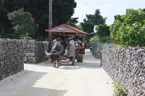 竹富島、水牛車