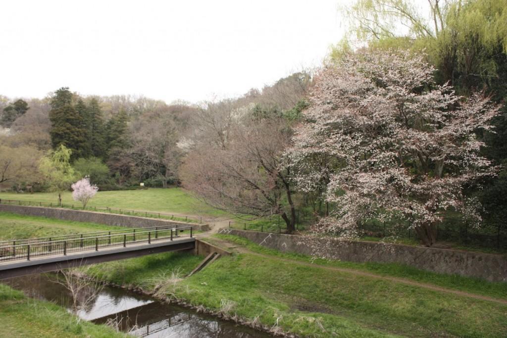 野川公園、北側